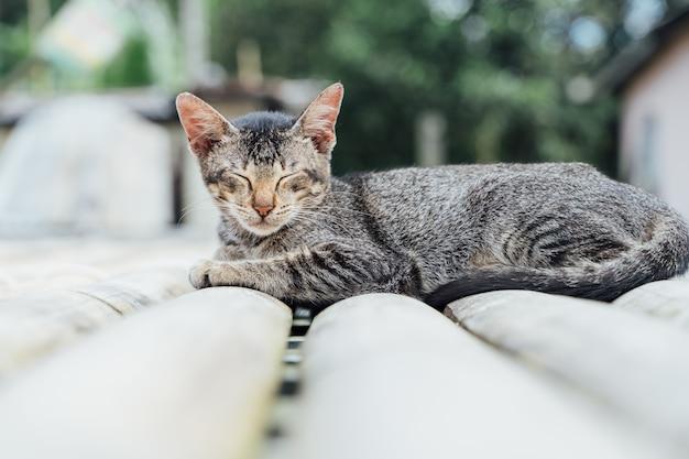 Gato cinza dormindo de costas do lado de fora