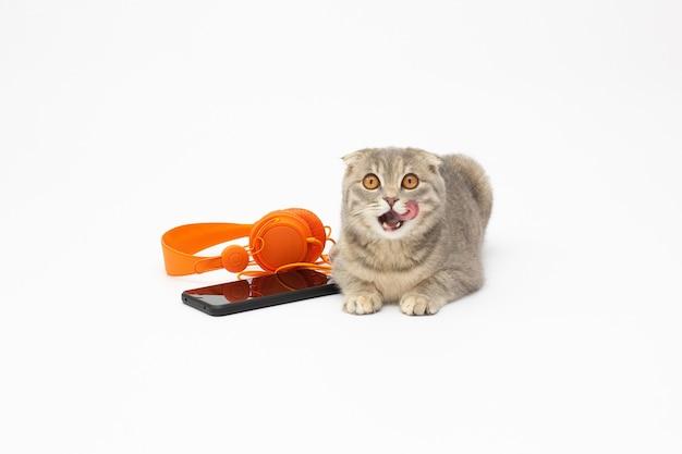 Gato cinza em uma superfície branca ouvindo música em um fone de ouvido e telefone laranja