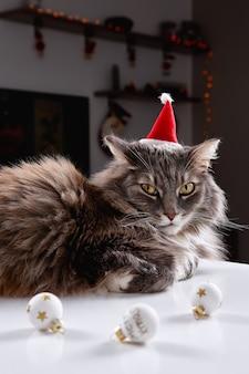 Gato cinza engraçado brincando com um brinquedo de natal