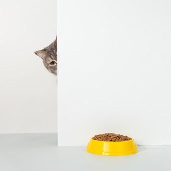 Gato cinza espreita pelo canto, emoções animais, olha para uma tigela de comida, em um conceito branco.