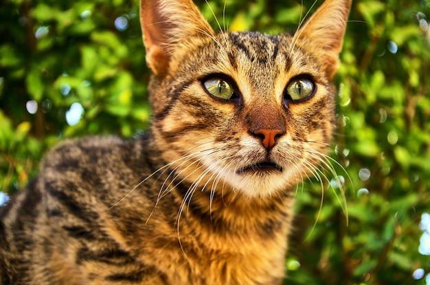 Gato cinza fofo olhando para você