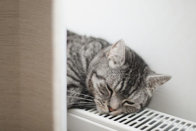 Gato cinza fofo relaxando no radiador quente em casa