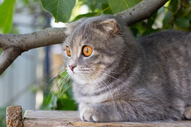 Gato cinza relaxante em cerca de madeira com fundo de folhas verdes