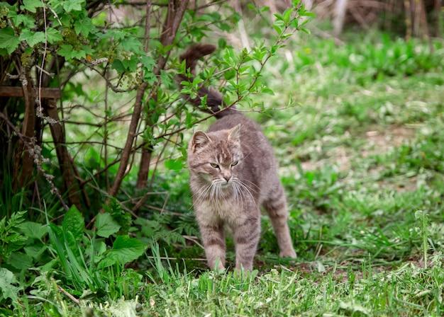 Gato cinzento ao ar livre no verão