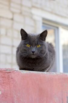 Gato cinzento bonito sentado lá fora no verão