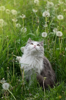Gato cinzento brincando no jardim