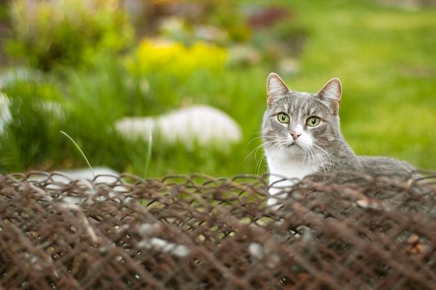 Gato cinzento com os olhos verdes que sentam-se no jardim. retrato de gato