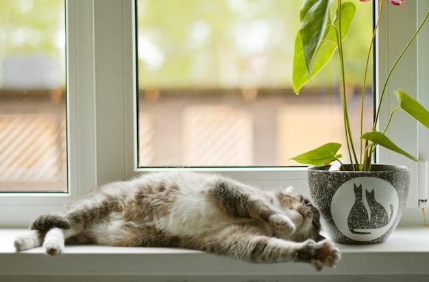 Gato cinzento dormindo no peitoril da janela ao lado de uma flor em uma panela com gatos