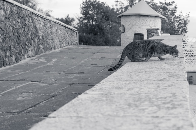 Gato cinzento em azul na luz solar