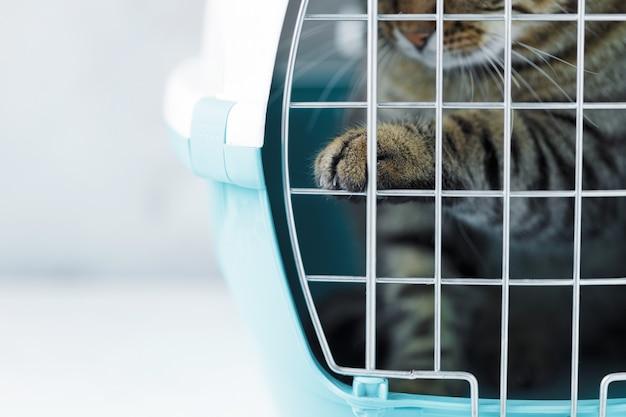 Gato cinzento em uma gaiola para transporte