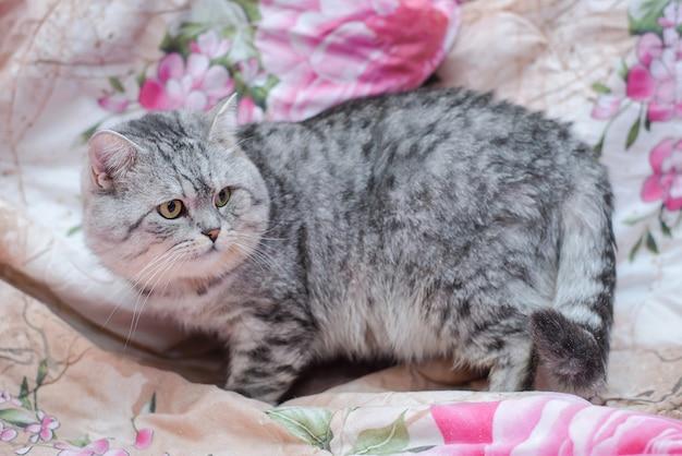 Gato cinzento fofo