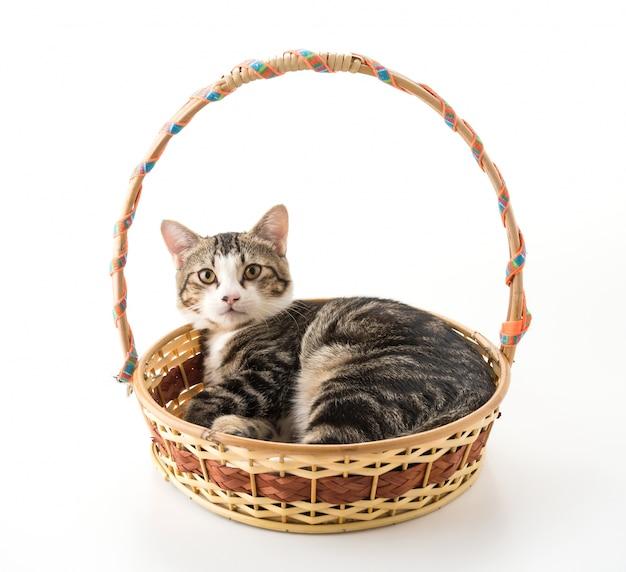 Gato cinzento na cesta Foto gratuita