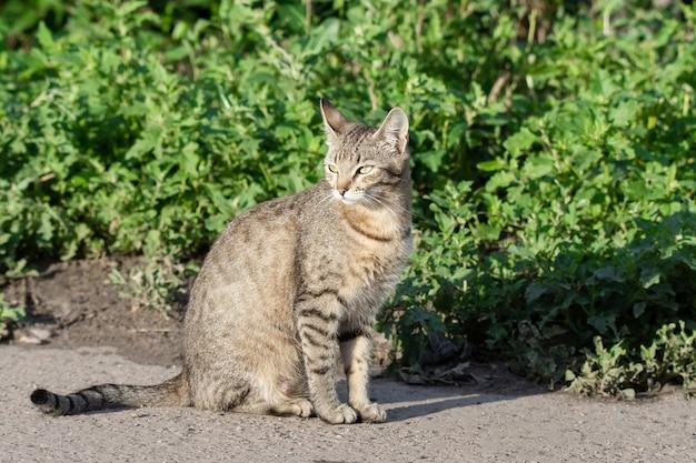 Gato cinzento na grama