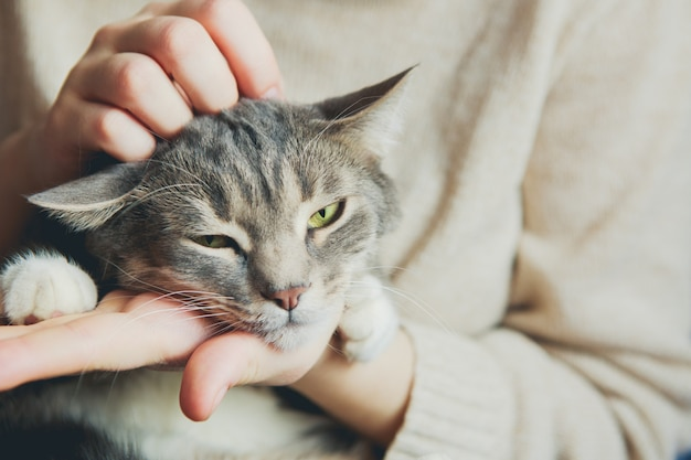 Gato cinzento nos braços de uma menina acariciando um gato