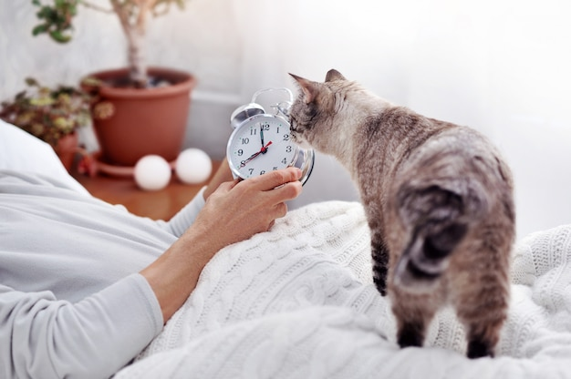 Gato cinzento, olhando para o despertador nas mãos do homem sênior