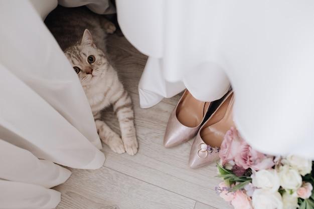 Gato cinzento perto de cortinas, alianças, buquê e sapatos no chão