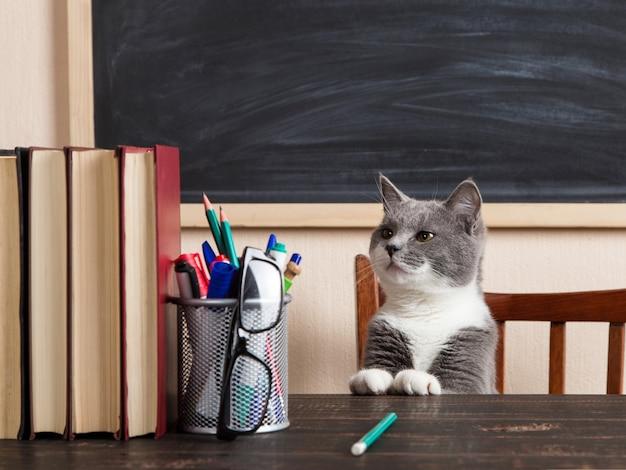 Gato cinzento se senta em uma mesa com livros e cadernos, estudando em casa.