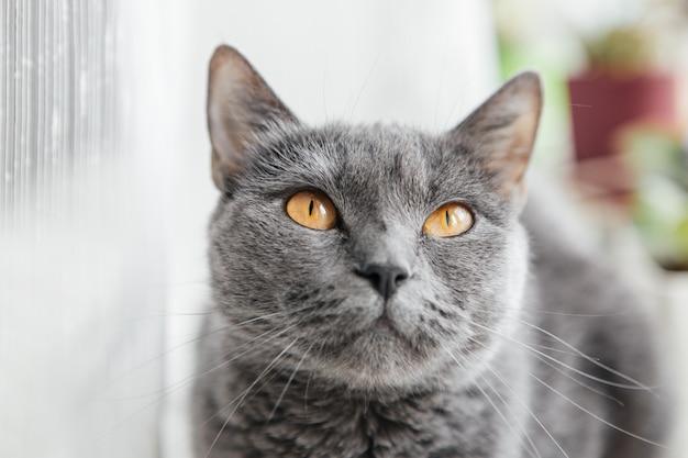 Gato cinzento senta-se em um peitoril da janela