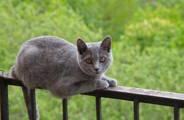 Gato cinzento sentado na varanda contra uma árvore.