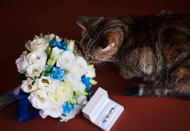 Gato com alianças