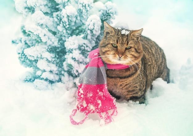 Gato com cachecol de malha sentado ao ar livre na neve