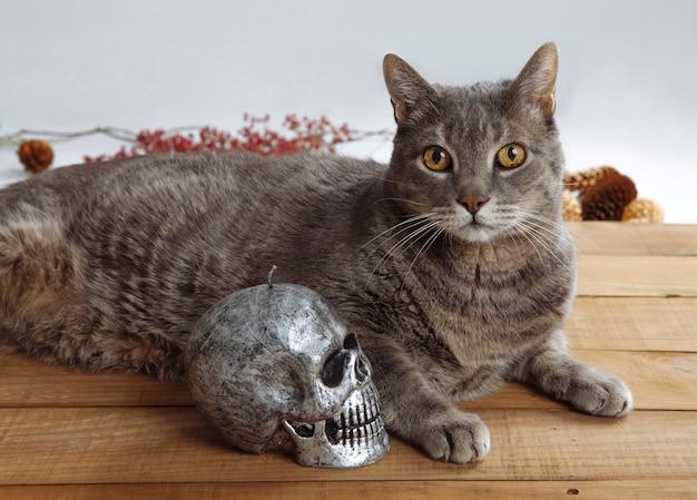 Gato com caveira na madeira