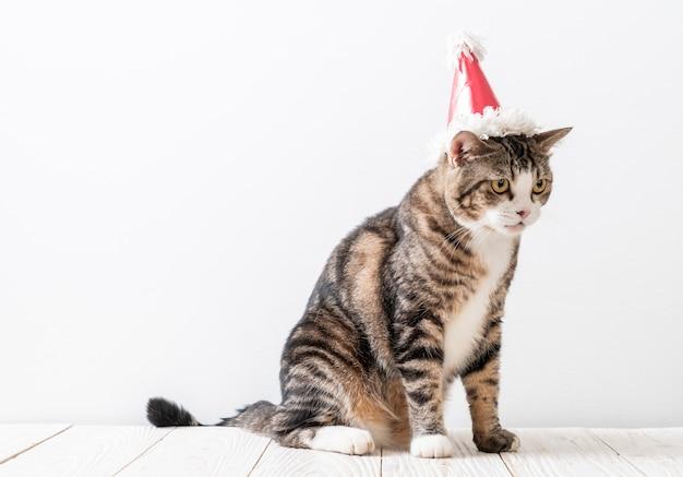 Gato com chapéu de festa