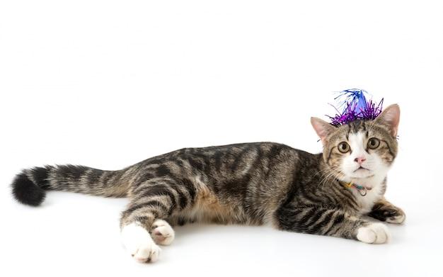 Gato com chapéu do partido