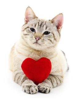 Gato com coração vermelho do dia dos namorados isolado