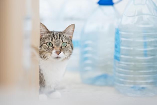 Gato com garrafas de plástico natureza poluição