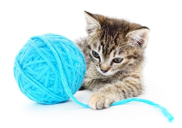 Gato com novelo de lã