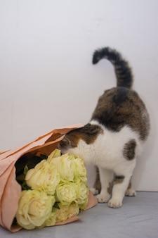 Gato com um buquê de rosas claras.