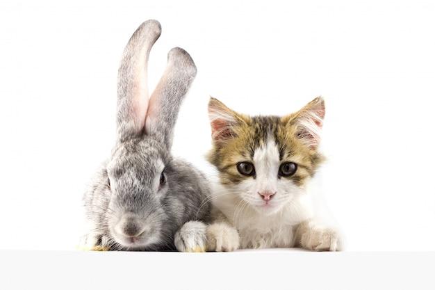 Gato com um coelho olhando para frente