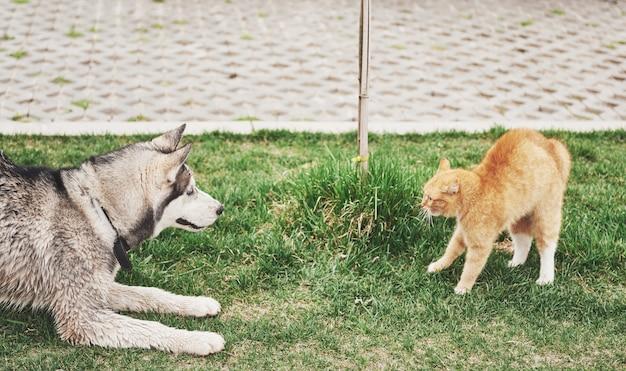 Gato contra um cachorro, uma reunião inesperada ao ar livre