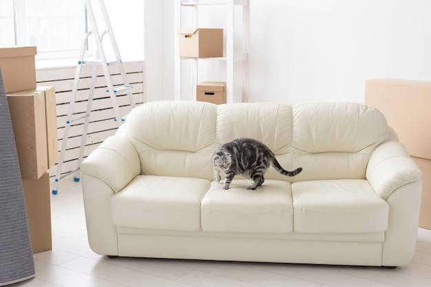 Gato curioso e cinza scottish fold está explorando um novo apartamento depois de se mudar. o conceito de vida animal no apartamento e cuidar dos gatos.