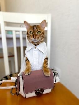 Gato de bengala com roupas sentado sobre um fundo desfocado