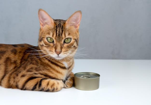 Gato de bengala e lata, comida de gato molhada em uma lata fechada