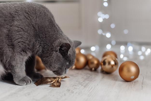 Gato de bengala em um fundo da árvore de natal que joga com as bolas e os brinquedos dourados que procuram presentes.
