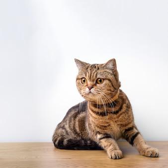 Gato de bengala em uma mesa