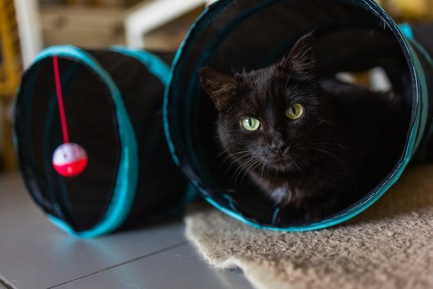 Gato de chita emoldurado e alerta no brinquedo do túnel de gato.
