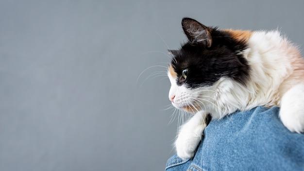 Gato de cópia-espaço no ombro da mulher