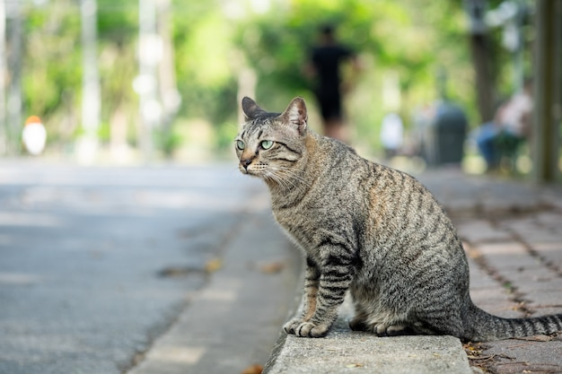 Gato de gato malhado que olha algo na grama no jardim.