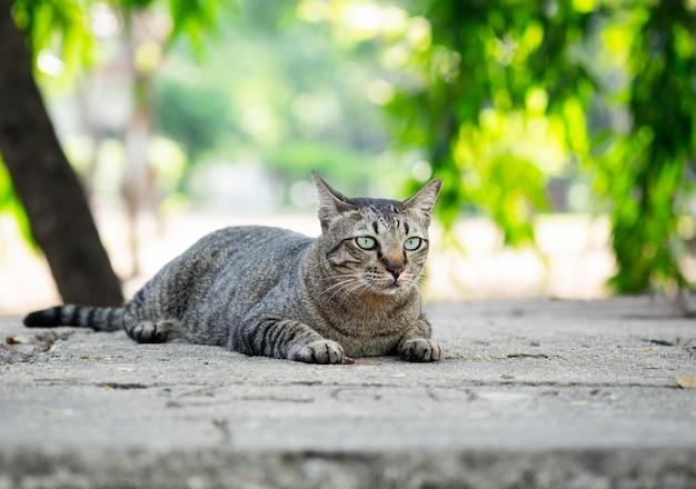 Gato de gato malhado que senta-se no assoalho no jardim.