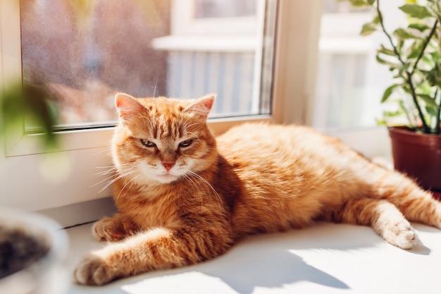 Gato de gengibre deitado no peitoril da janela em casa