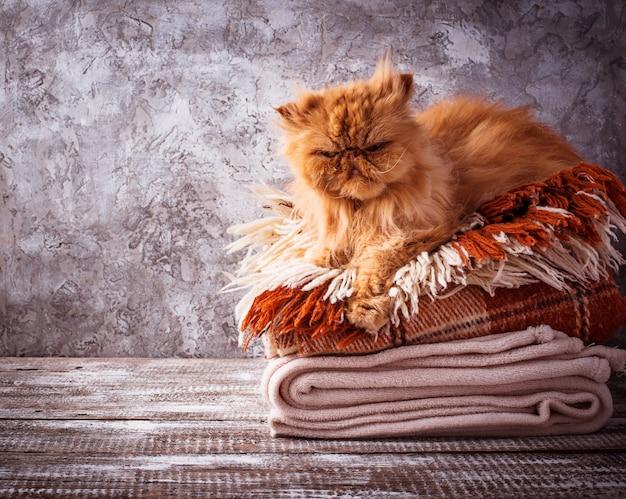 Gato de gengibre deitado sobre uma pilha de mantas
