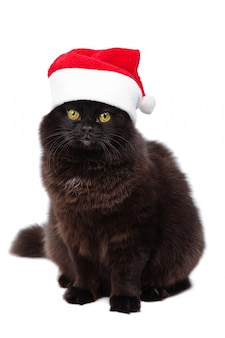 Gato de natal bkack no chapéu de papai noel vermelho isolado