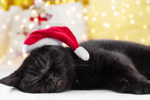 Gato de natal dormindo