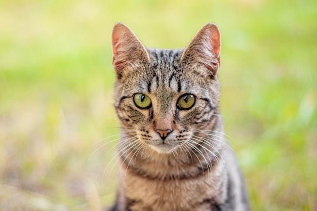 Gato de olho verde com grama borrada