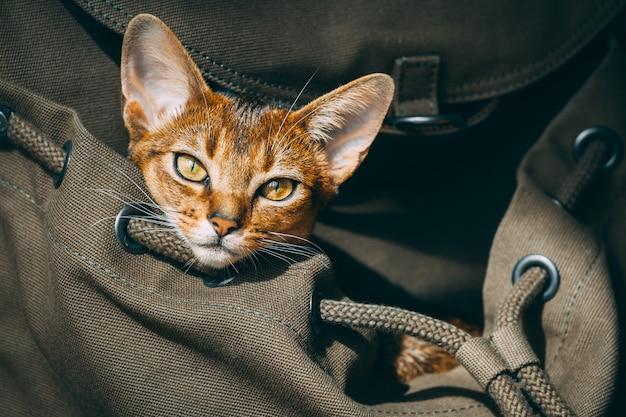 Gato de orelhas grandes marrom sentado no saco