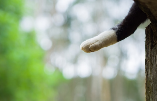 Gato de pata branca com foco suave em bokeh de fundo